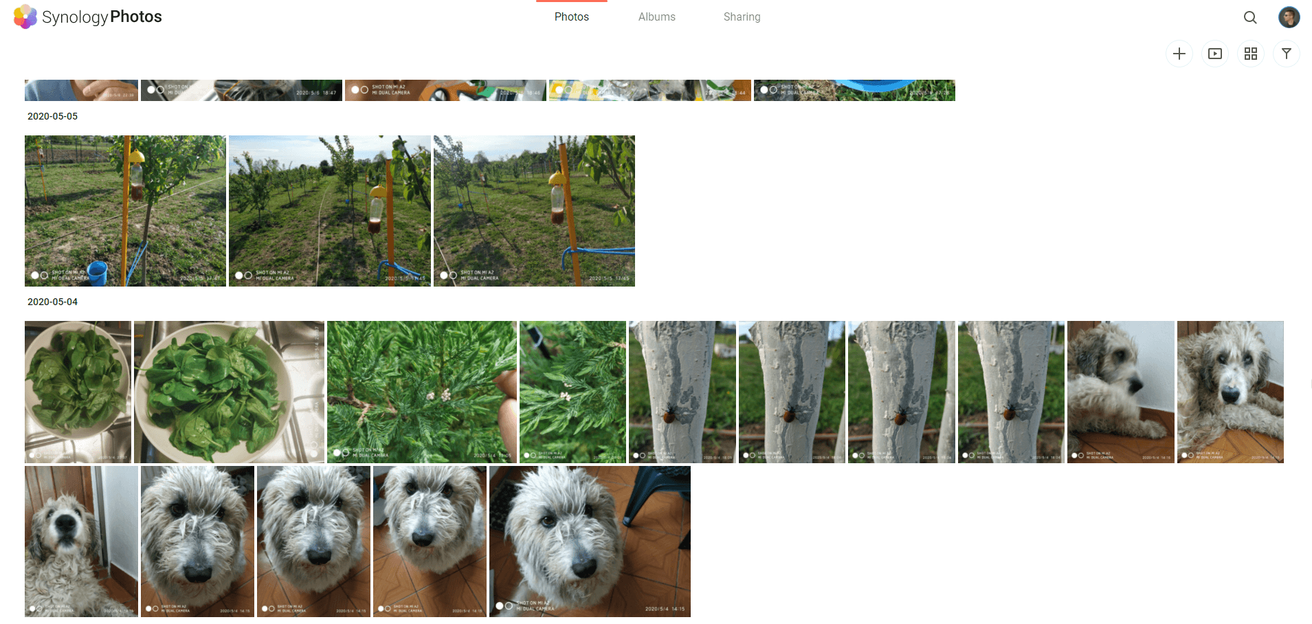 9 Switch From Google Photos to Synology Photos
